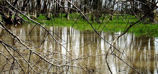 murkywater