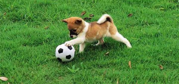 Playful-Puppy3